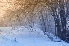 Gli alberi nell'umore, nella tristezza, nella apatia e nell'incertezza mistici misteriosi della foschia Fotografia Stock Libera da Diritti