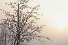 Gli alberi nell'umore, nella tristezza, nella apatia e nell'incertezza mistici misteriosi della foschia Immagini Stock Libere da Diritti