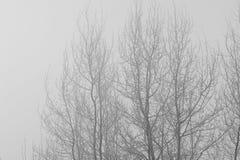 Gli alberi nell'umore, nella tristezza, nella apatia e nell'incertezza mistici misteriosi della foschia BW Immagine Stock Libera da Diritti