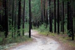 Gli alberi nella foresta Fotografia Stock
