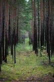 Gli alberi nella foresta Fotografie Stock