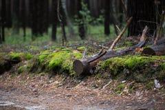 Gli alberi nella foresta Immagine Stock Libera da Diritti