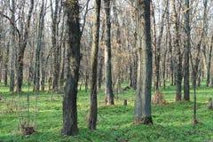 Gli alberi nella foresta Immagini Stock