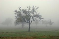 Gli alberi nella nebbia Immagine Stock