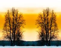 Gli alberi nudi. Fotografia Stock
