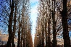 Gli alberi nudi allineano la strada nel parco della città al tramonto Immagine Stock Libera da Diritti