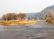 Gli alberi nudi di autunno si avvicinano al fiume Fotografie Stock