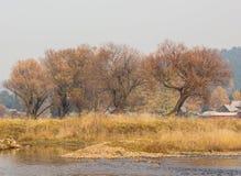 Gli alberi nudi di autunno si avvicinano al fiume Immagine Stock