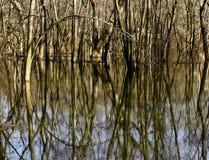 Gli alberi nudi sono riflessi in una zona umida in Pennsylvanai occidentale Fotografie Stock Libere da Diritti