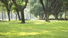Gli alberi ombreggiati Fotografia Stock Libera da Diritti
