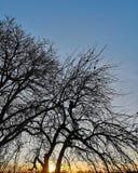 Gli alberi profilano con un gatto immagini stock