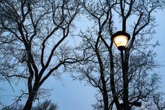 Gli alberi profilano e iluminazione pubblica alla sera scura dell'inverno nel parco della città Fotografia Stock