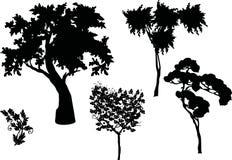 Gli alberi proiettano l'insieme Immagine Stock