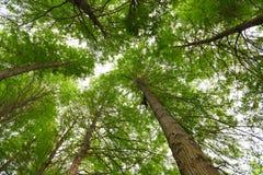 Gli alberi recentemente germogliati Fotografie Stock Libere da Diritti