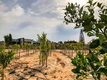 Gli alberi recentemente piantati su un'azienda agricola sono innaffiati con un'efficienza di ricerca dell'impianto di irrigazione Fotografia Stock