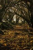 Gli alberi scavano una galleria durante l'autunno/tunnel della foresta con i colori vibranti immagini stock libere da diritti