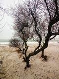 Gli alberi scuri sulla riva del mare immagini stock