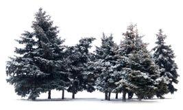 Gli alberi si attillano Immagine Stock