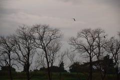 Gli alberi si avvicinano al fiume Fotografia Stock