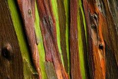 Gli alberi si rallegrano Fotografia Stock Libera da Diritti