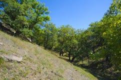Gli alberi si sviluppano nel fascio Fotografia Stock Libera da Diritti