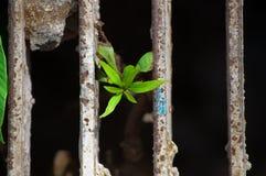 Gli alberi si sviluppano su vecchio ferro Fotografia Stock