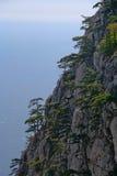 Gli alberi si sviluppano sulla roccia Fotografie Stock