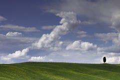 gli alberi soli della 1 Cipro nei campi intorno a San Quirico nel €™Orcia di Val Dâ in Toscana immagini stock libere da diritti