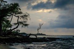Gli alberi sono profilati ed il sole è nascosto dalle nuvole prima del sole Fotografia Stock Libera da Diritti