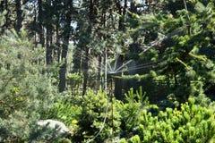 Gli alberi sono spruzzati con gli spruzzatori automatici dell'acqua Immagine Stock
