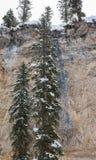 Gli alberi spolverati neve si sviluppano contro la scogliera immagini stock