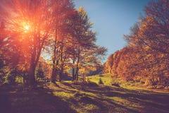 Gli alberi stupefacenti su una collina pendono al sole alla valle della montagna Fogliame variopinto in autunno Fotografia Stock