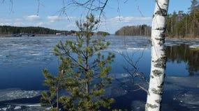Gli alberi sui precedenti del lago Fotografia Stock Libera da Diritti