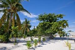 Gli alberi sulla spiaggia Fotografie Stock Libere da Diritti