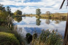 Gli alberi sulla sponda del fiume quequen grande fotografie stock libere da diritti