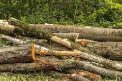 Gli alberi tagliati in lungo collega un mucchio fotografia stock