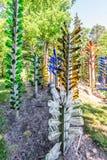 Gli alberi variopinti della bottiglia decorano un'iarda fotografia stock libera da diritti