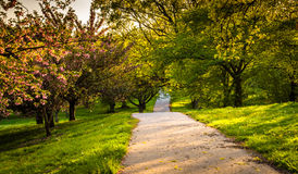Gli alberi variopinti lungo una traccia alla collina del druido parcheggiano a Baltimora, mA Fotografia Stock