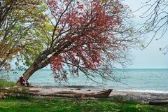 Gli alberi variopinti vicino al mare Fotografie Stock Libere da Diritti