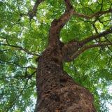 Gli alberi verdi in natura della foresta si inverdiscono la luce solare di legno Fotografia Stock