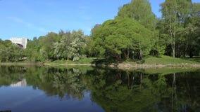Gli alberi verdi sono riflessi brillantemente in un lago dello specchio Fondo perfetto ciclo stock footage