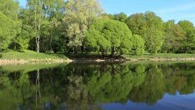 Gli alberi verdi sono riflessi brillantemente in un lago dello specchio Fondo perfetto ciclo archivi video