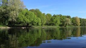 Gli alberi verdi sono riflessi brillantemente in un lago dello specchio Fondo perfetto nessuno archivi video