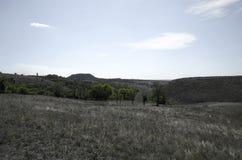 Gli alberi verdi stanno fuori contro le aree pallide Fotografia Stock