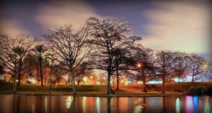 Gli alberi vicino al lago parteggiano durante la notte Immagine Stock Libera da Diritti