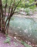 Gli alberi vicino all'acqua in primavera irrompono il pomeriggio immagini stock