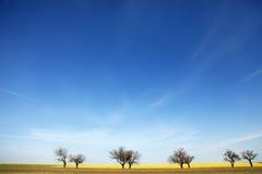 Gli alberi vicino colza il campo. Fotografia Stock