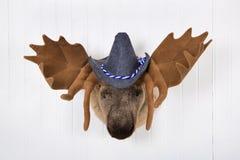Gli alci si dirigono con i corni e un cappello bavarese del feltro bianco con wh blu Immagini Stock