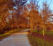 Gli allungamenti del percorso fra gli alberi Fotografia Stock Libera da Diritti