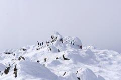 Gli alpinisti hanno raggiunto la cima del supporto Konzhakovskiy Kamen Immagine Stock Libera da Diritti